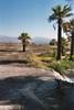 Thumbnail Lake Mead Palm Oasis