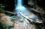 Berry Creek Falls, CA