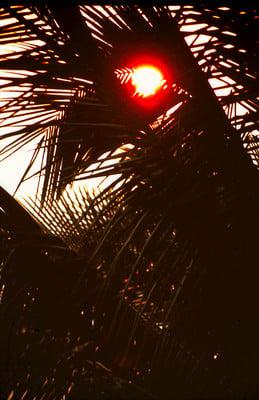 Product picture Palm Tree Sunset Mazatlan Mexico