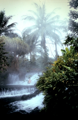 Product picture Tabacon Hot Springs Palm Tree with Steam